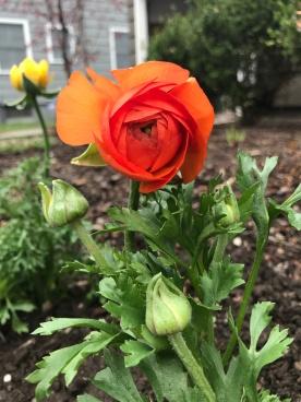 orange run